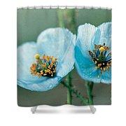Himalayan Blue Poppy Shower Curtain