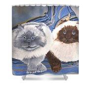 Himalayan Cats  Shower Curtain
