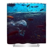 Hippo Eating African Cichlids Shower Curtain
