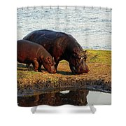 Hippo Mother And Child - Botswana Africa Shower Curtain