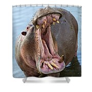Hippo's Open Mouth Shower Curtain