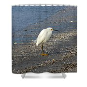 Hitchcock Snowy Egret Shower Curtain