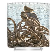 Hitching A Ride Shower Curtain