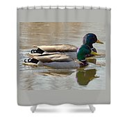 Two Mallards Swimming Quietly Shower Curtain