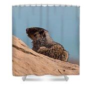 Hoary Marmot On Blue Shower Curtain