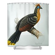 Hoatzin Shower Curtain