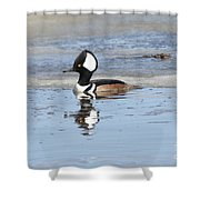 Hodded Merganser With Reflection Shower Curtain