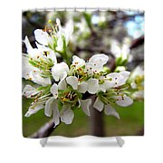 Hog Plum Blossoms Shower Curtain