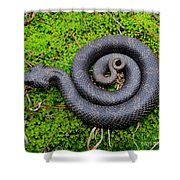 Hognose Spiral Shower Curtain