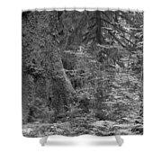 Hoh Rain Forest 3369 Shower Curtain