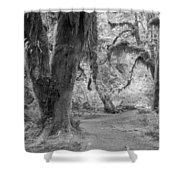 Hoh Rain Forest 3378 Shower Curtain