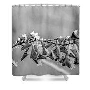 Hoir Frost On Leaves Shower Curtain