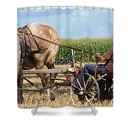Hold Your Horses Shower Curtain
