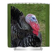 Holiday Portrait Shower Curtain