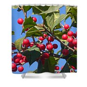 Holly Berries On A Wintry Day I Shower Curtain