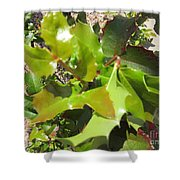 Holly Leaves Shower Curtain