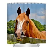 Holly Springs Shower Curtain