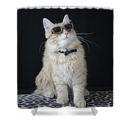 Hollywood Cat Shower Curtain