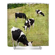 Holstein Cattle Shower Curtain