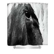 Holstein Shower Curtain