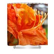 Home Decor Orange Rhodie Flower Art Print Baslee Troutman Shower Curtain