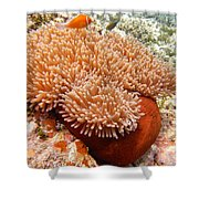 Home Of The Clown Fish 2 Shower Curtain