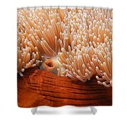Home Of The Clown Fish 3 Shower Curtain