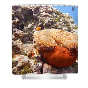 Home Of The Clown Fish 4 Shower Curtain