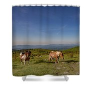 Home On Therange  Shower Curtain