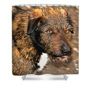 Homeless Dog Charlick Shower Curtain
