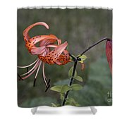 Homestead Tiger Lilly Shower Curtain