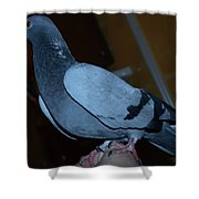 Homing Pigeon Shower Curtain