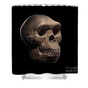 Homo Habilis Skull Shower Curtain