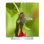 Honey Bee 11 Shower Curtain