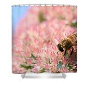 Honey Bee 3 Shower Curtain