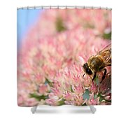 Honey Bee 3 Shower Curtain