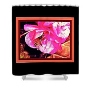 Honey Bee In A Pink Flower Shower Curtain