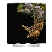 Honey Bee Kick, Apis Mellifera Shower Curtain