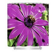 Honey Bee On A Spring Flower Shower Curtain