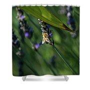 Honey Bee On Flower #4 Shower Curtain