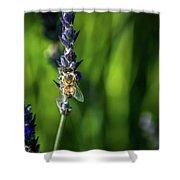 Honey Bee On Flower #5 Shower Curtain
