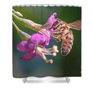 Honey Bee On Goji Berry Flower Shower Curtain