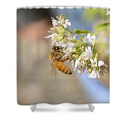 Honey Bee On Herb Flowers Shower Curtain