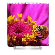 Honey Bee Pollinating Zinnia Shower Curtain