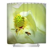 Honey Bees And Magnolia II Shower Curtain