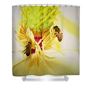 Honey Bees And Magnolia Shower Curtain