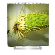 Honey Bees And Magnolia Three Shower Curtain