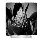 Honey Pot King Sugar Bush Protea Shower Curtain