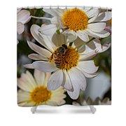 Honeybee And Daisy Mums Shower Curtain
