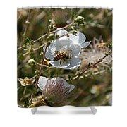 Honeybee Gathering From A White Flower Shower Curtain